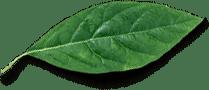 Микрозелень (микрогрин) СПБ