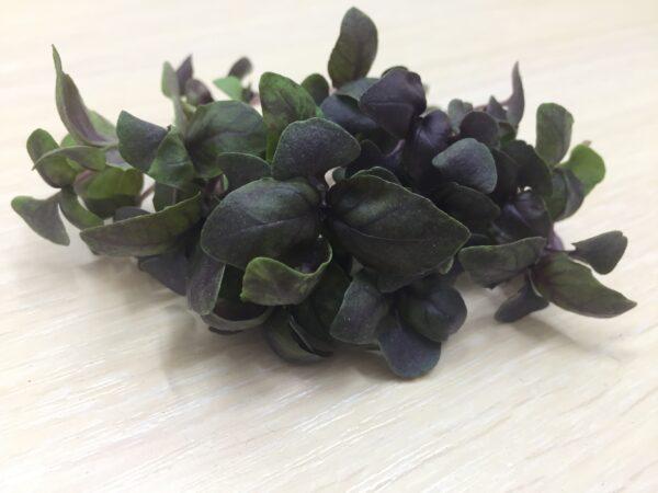 Микрозелень (микрогрин) СПБ базилик фиолетовый