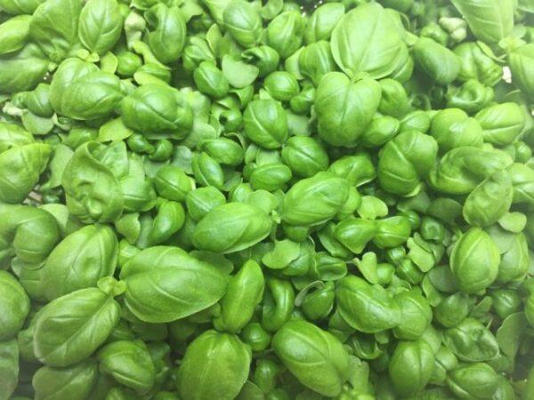 Микрозелень (микрогрин) базилик зеленый